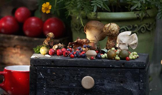 Week end funghi e castagne