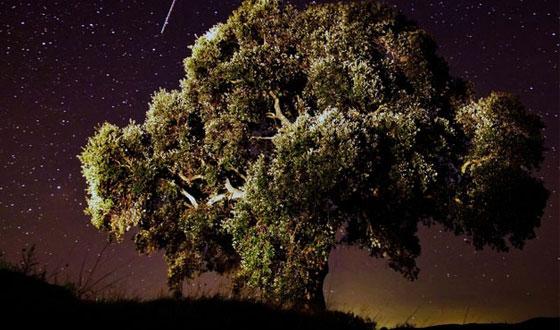 Cadono le stelle